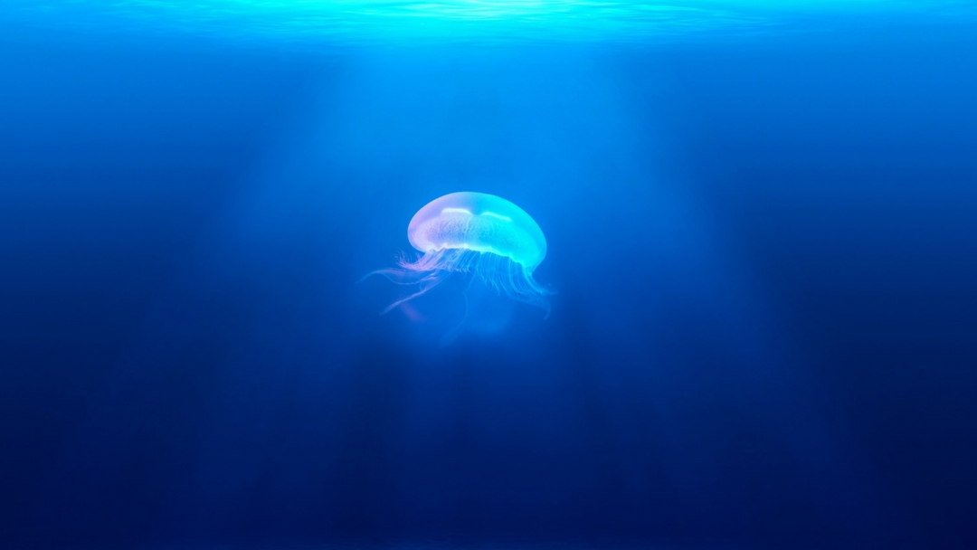Jellyfish Breathing, It's a Thing!
