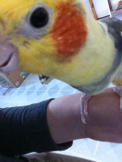 Bela the Bird