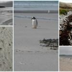 Winter Beach 2 inspiration blog