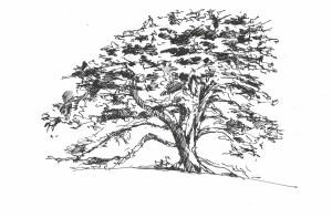 15Nov14 tree