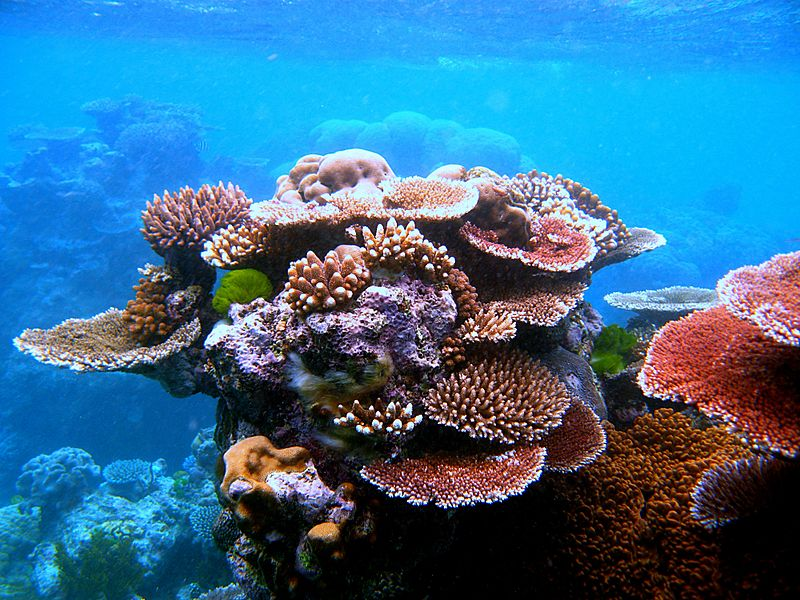 The Great Barrier Reef: Threats and Consequences
