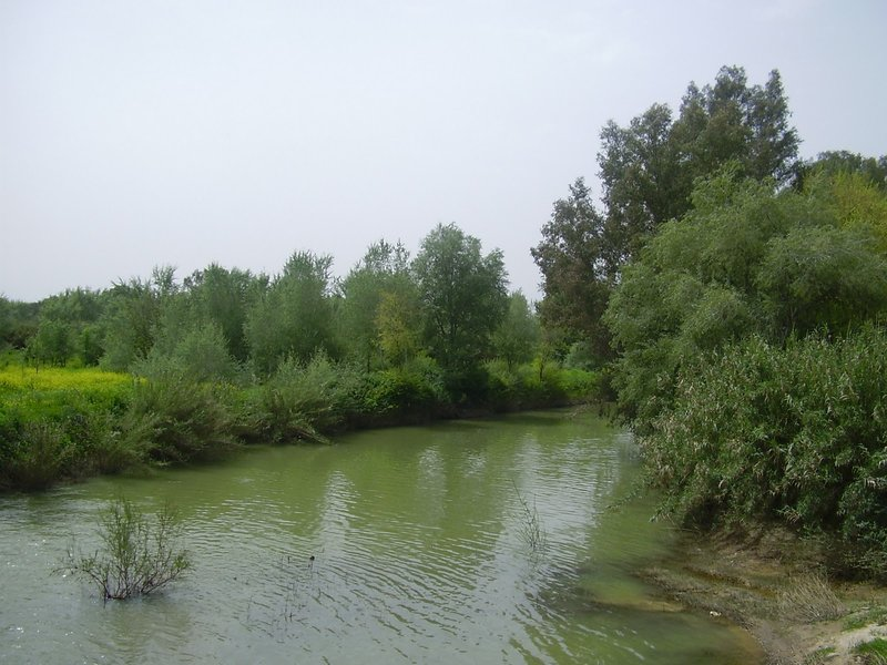 El río Guadiamar en su paso por el Aljarafe. Junta de Andalucía.