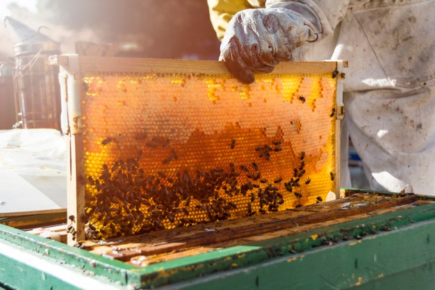 Explotación apícola. Foto de archivo.
