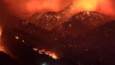 Photo of وفاة 4 اشخاص في حرائق الغابات بتيزي وزو