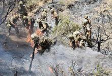 Photo of استشهاد 42 منهم 25 عسكريا في حرائق الغابات في الجزائر