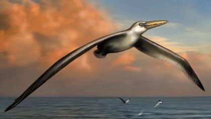dünyanın en büyük kuşunun resmi