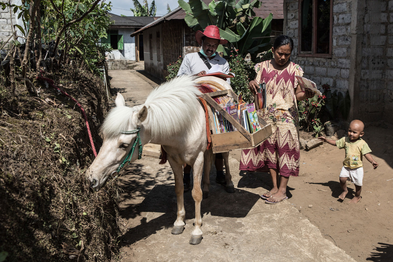 Image result for serang horse library