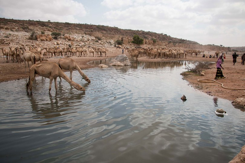 Thousands forced to move as drought strikes Puntland