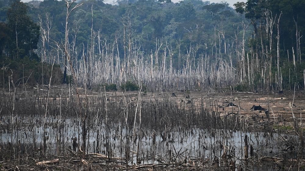 Brazil's fires
