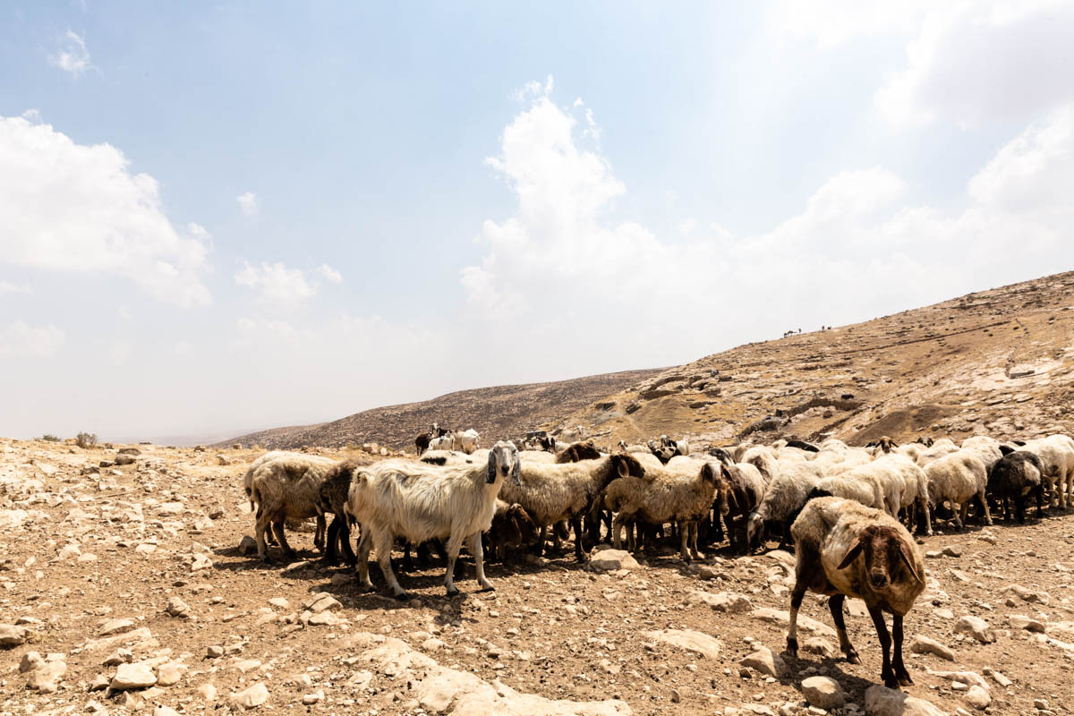 Local herders lost access to large parts of their grazing land due to illegal settlement expansion. [Alyona Synenko/ICRC]