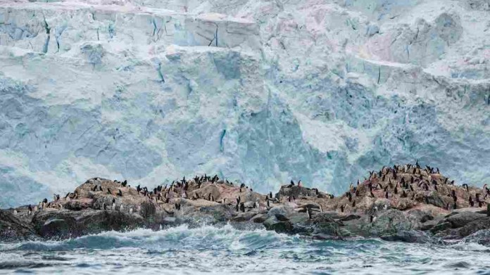 A chinstrap penguin colony in front of a glacier on Elephant Island in Antarctica [Christian Aslund/Greenpeace]