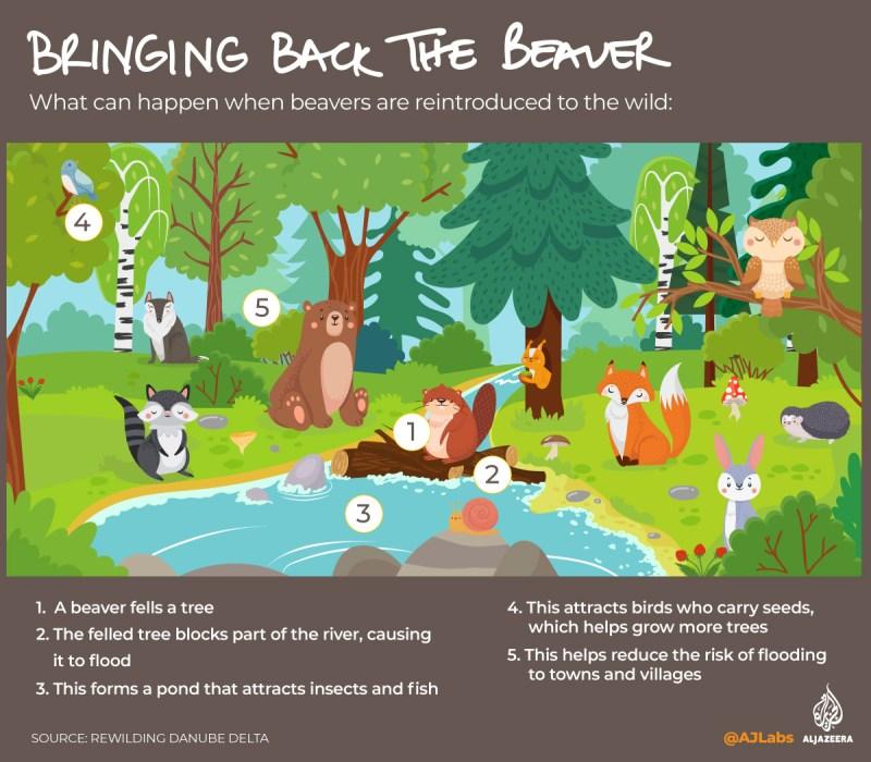 Interactive: Green Read - Beaver