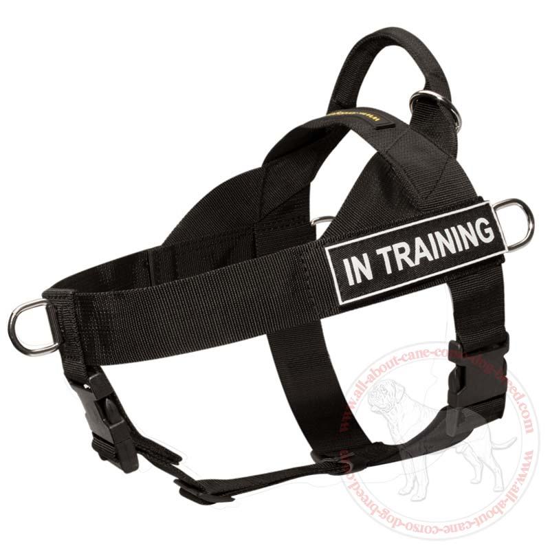 Training Walking