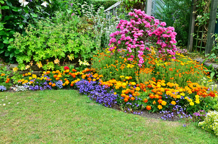 A List Of Perennial Flowers From A To Z With Pictures  A List of Perennial Flowers For Your Garden