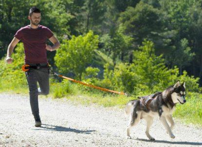 Harnais I-Dog One