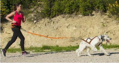 Ligne de traction I-Dog One
