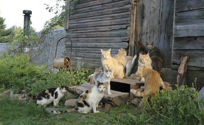 Image result for cats in barn