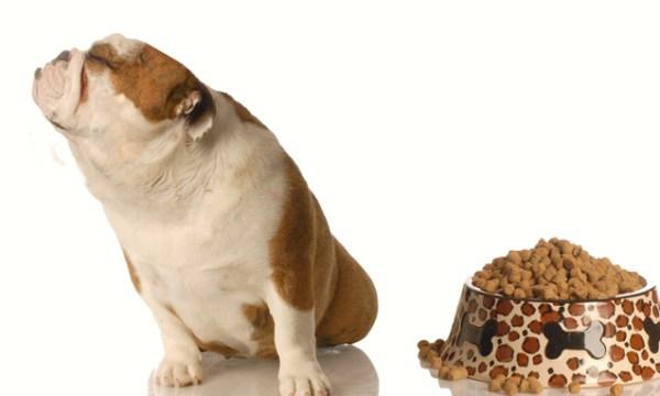 Dog On A Hunger Strike