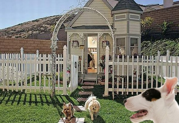 Amazing Dog House Designs