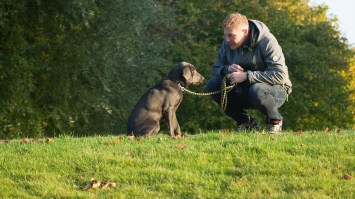 5 Benefits of Being a Dog Owner