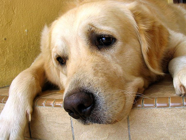 Treatments For Dog Allergies