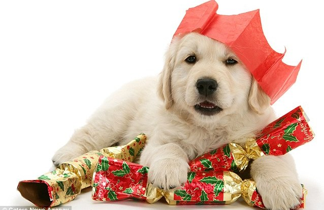 Lovely Dog Gifts