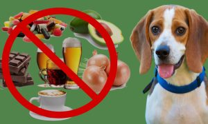 Bad Food For Dogs