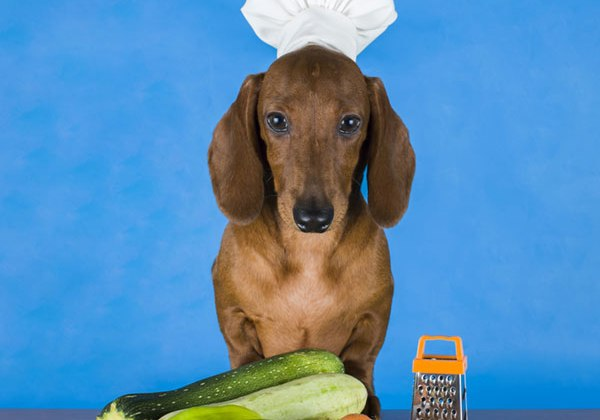 The Potential Risks Of A Vegetarian Dog Diet