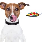 can-you-give-a-dog-pain-medicine
