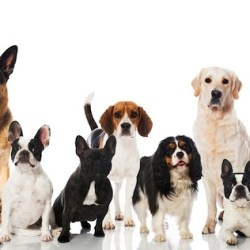 Long-Living Dog Breeds