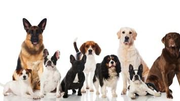 Long-Living Dog Breeds
