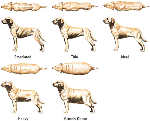 How Much Should Your Dog Weigh?