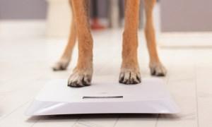 Dog Weigh