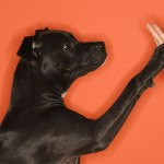 How to Teach Your Dog to Shake