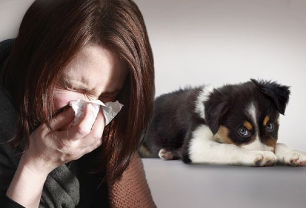 photolibrary_rm_photo_of_sneezing_woman_and_dog