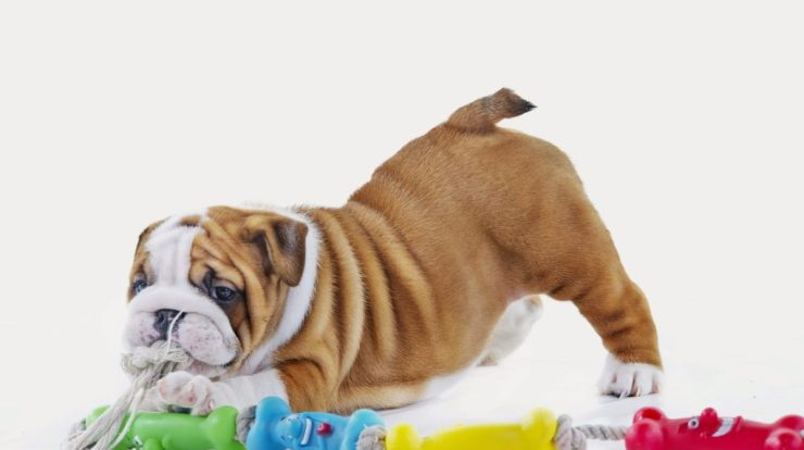 5 Must-Have Puppy Products