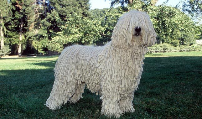 Some Pretty Weird Dog Breeds
