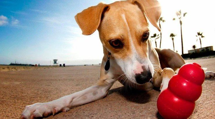 Toys and accessories for dogs
