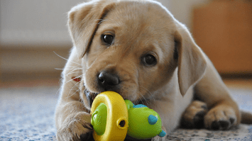 10 Things You Need Before Getting a Dog