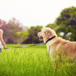 Good dogs for kids with allergies