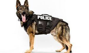 Most Popular Police Dogs