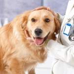 Mesothelioma in dogs