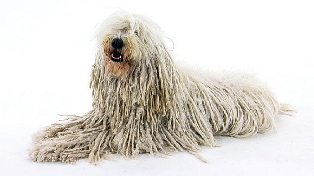 Long Haired Dogs