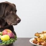 The best healthy dog treats