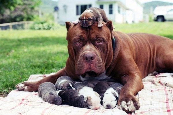 dad-dogs-with-their-pups-16-700x467