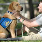 Dogs that help people with disabilities