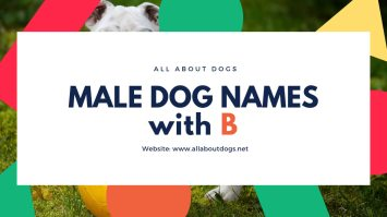 Male Dog Names with B