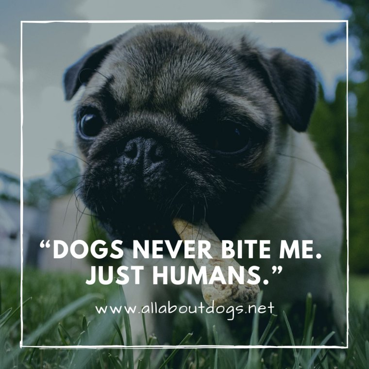 Dog Quotes 2