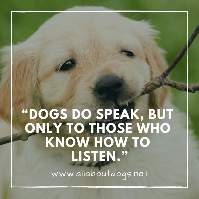Dog Quotes 4