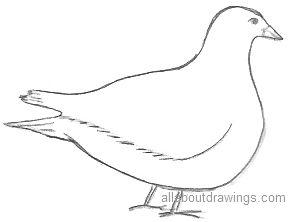 Dove Bird Pencil Drawing - On Log Wall